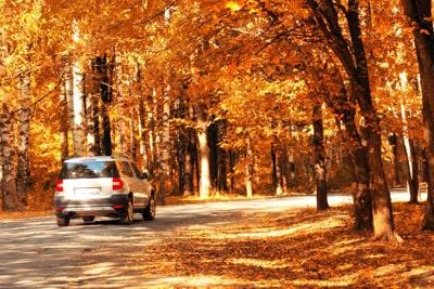 car damage leaves, autumn leaves damage, fall leaves damage